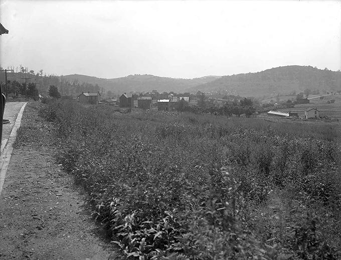 20090728 cp 0181